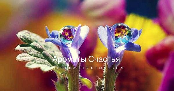 ароматы счастья